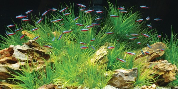 Keeping an Eco-Friendly Aquarium