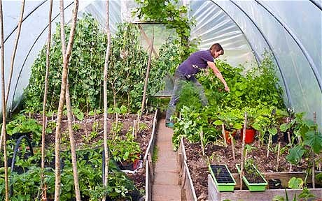 Benefits of Using a Polytunnel for Your Organic Vegetable Garden