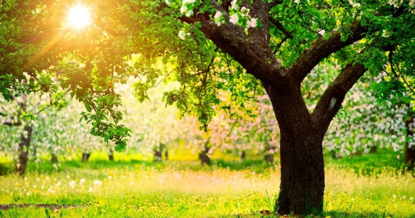 The Secret Benefits of Trees