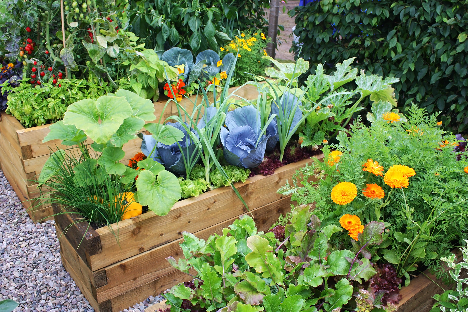 Tips for Starting a Home Vegetable Garden | Eco Talk