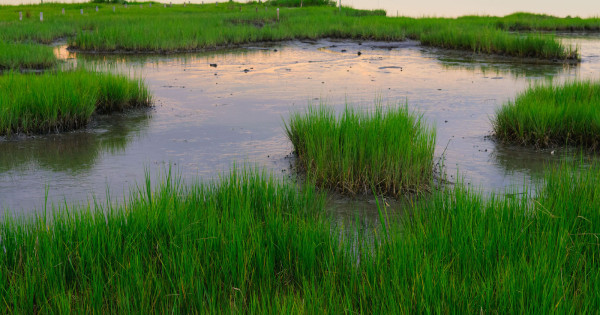 Protecting Wetlands During and After Industrial Uses