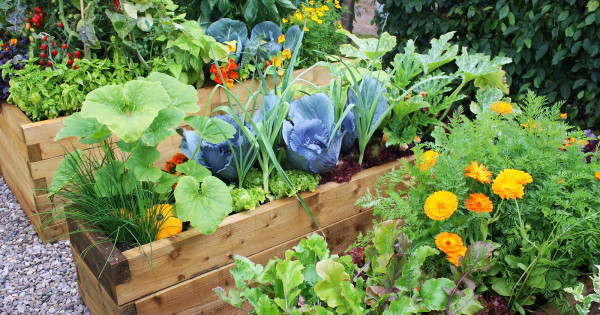 Tips for Starting a Home Vegetable Garden